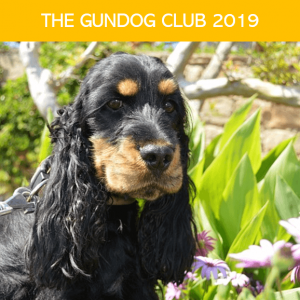 Gundog Club Calendar Cocker Spaniel puppy